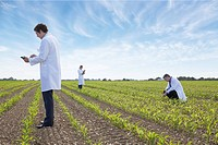 Scientists examining crops in field