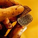 fingers holding truffle