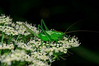 Insect macro, Russia, Moscow Region
