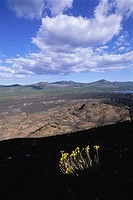 Wildflowers atop Cinder Cone