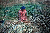 Sugarcane Worker, Madagascar