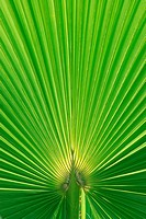 Beautiful Palm Tree Leaf texture