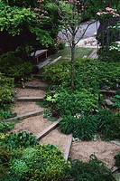 View of Steps in Japanese Garden