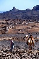 A Tuareg man leads a camel through the Sahara Desert in the Ahaggar region of southern Algeria.