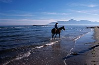A horse and jockey among the waves at a beach at Tyrella. County Down, Northern Ireland. Ca. 1995.