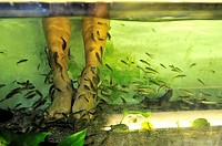 Traditional fish massage pedicure  Singapore