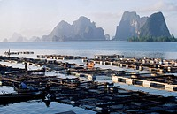 A fish farm in Phang Bay.