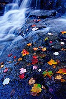 Autumn Leaves Near a Waterfall