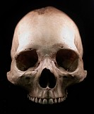 Human skull _ bone head dead teeth spooky scary pirate isolated