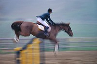Equestrian and Horse Show Jumping