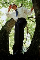 Ambitious businessman in a tree