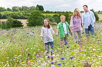 Family holding hands and walking in wildflower field