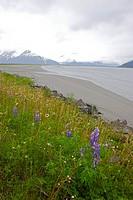 Alaska wetland