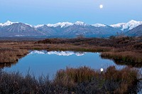 A full moon reflects on the surface of a small pond after sunset in Denali National Park & Preserve, Interior Alaska, Autumn
