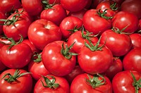 Heap of tomatoes