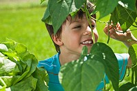 Germany, Bavaria, Boy looking at leaves in garden