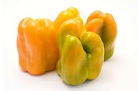 Yellow bell peppers Capsicum annuum on a white background