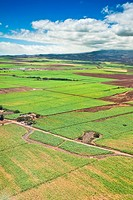 The Valley of Sugar - Maui's controversial 37,000 acre sugar cane fields - set to burn when harvesting, creating enormous smoke, ash and dust, Maui, H...