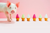 Piglet next to row of toy ice cream cones, studio shot