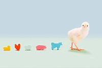 Chick standing with toy farm animals in studio
