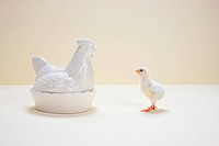 Chick looking at ceramic hen, studio shot