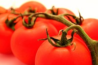 Tomato branch close_up