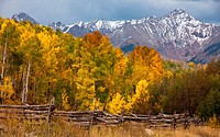 Aspens peaking in the San Juan Mountains of Colorado