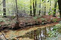 Autumn colors on Estate Spanderwoud, Hilversum, Goois Natuurreservaat, The Netherlands