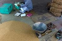 Market Jaipur, Rajasthan, India, Asia, grain