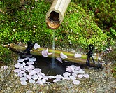 A bamboo water spout and a stone basin, with cherry blossom petals