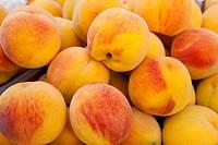 Peaches Prunus Persica