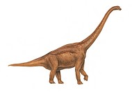 Cedarosaurus weiskopfae. This dinosaur lived in Utah, USA during the Barremian stage of the early cretaceous period.