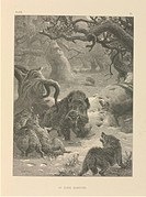Boar and wolves, 19th century. This artwork is titled ´At Close Quarters´ It is from ´The Life and Habits of Wild Animals´ 1874, illustrated the Germa...