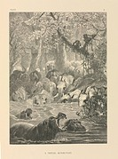 Tropical watering hole, 19th century. This artwork is titled ´A Tropical Bathing_Place´ It is from ´The Life and Habits of Wild Animals´ 1874, illustr...