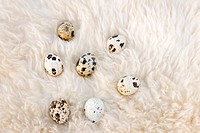 Quail eggs resting on wool