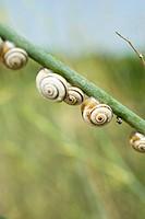 Snails on branch