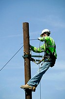 Repairing telephone lines. Telephone engineer up a telegraph pole while repairing domestic telephone lines.