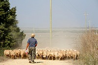 Sheep herder in the west coast ,Sardinia, Italy