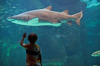 Boy admiring shark in aquarium