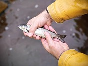 Close up of fisherman holding fish