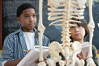 Boys studying skeleton together in classroom