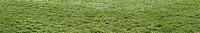 XXXL Grass Panorama