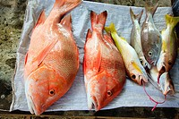 Red snapper fish, freshly caught and for sale from a roadside stall, near Mare Anglais, Beau Vallon, Mahe, Seychelles