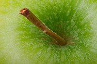 Apple stalk macro