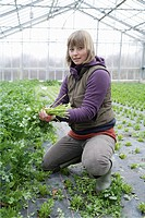 Germany, Upper Bavaria, Weidenkam, Young woman working in greenhouse of parsley