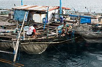 Fishing Platform called Bagan, Cenderawasih Bay, West Papua, Indonesia