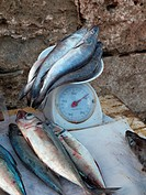 Morocco, Essaouira, Fishes on scales at fish market