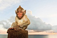 Indonesia, Bali Island, Bukit peninsula, Monkey sitting on stone