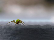 close up view of a green little spider with comic face