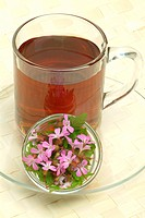 Herb Robert Tea _ medicinal tea _ herb _ Geranium robertianum _ Geranio di S. Roberto
